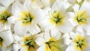 flowers-wallpapers-imoje-pl8726