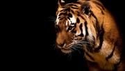 animals-wallpapers-imoje-…